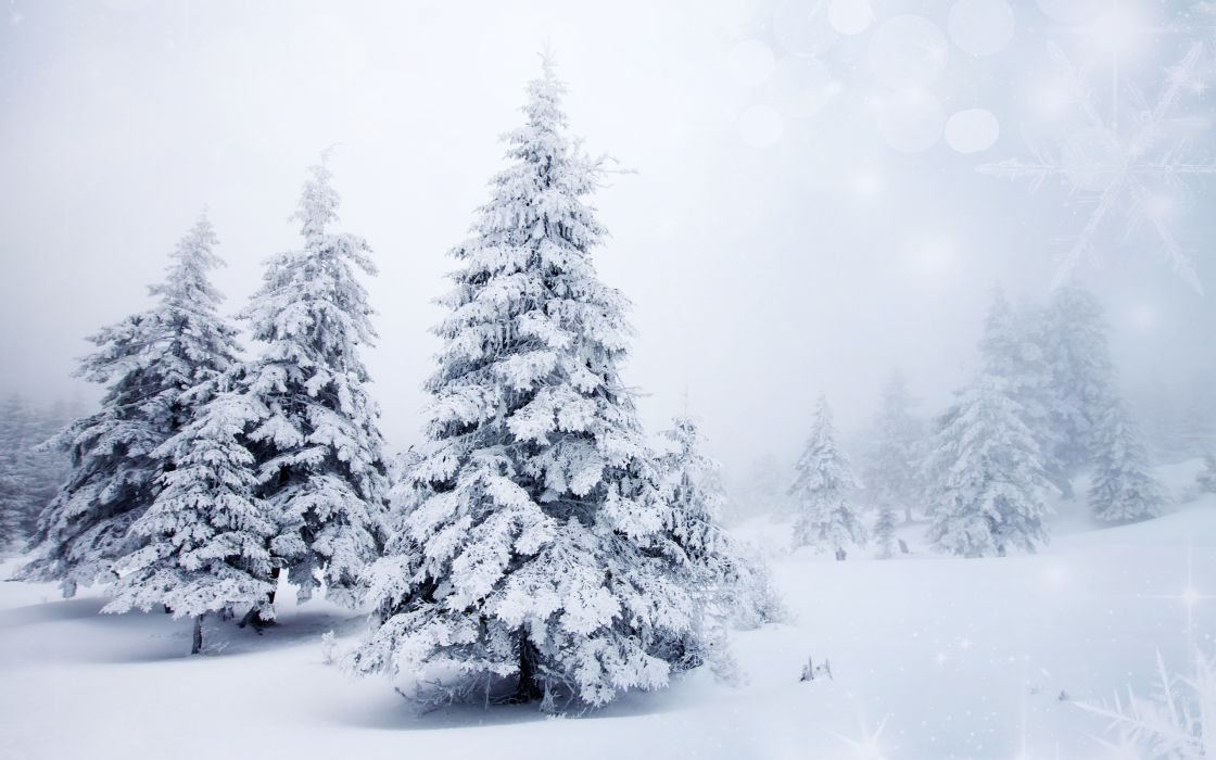 trees spruce winter snow    f wallpaper