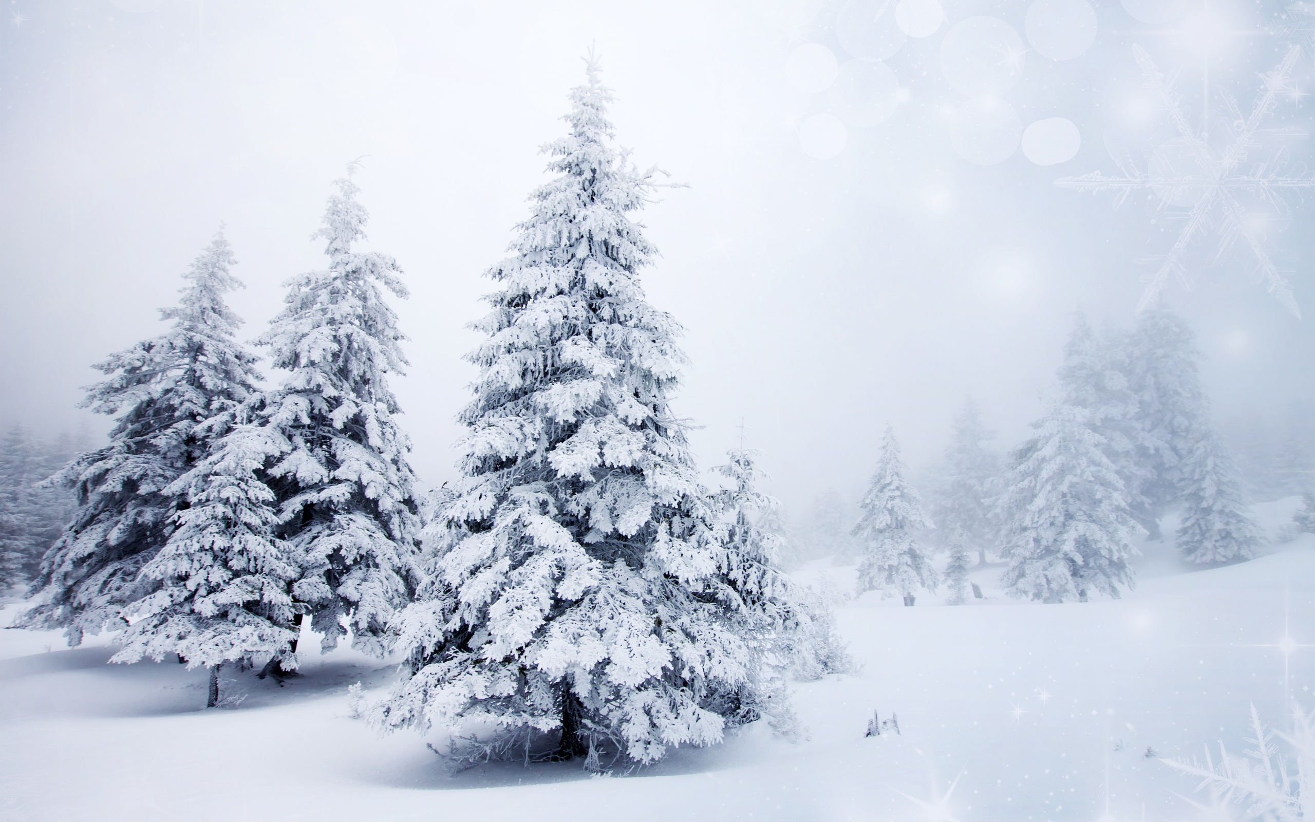 winter and snow trees - photo #11