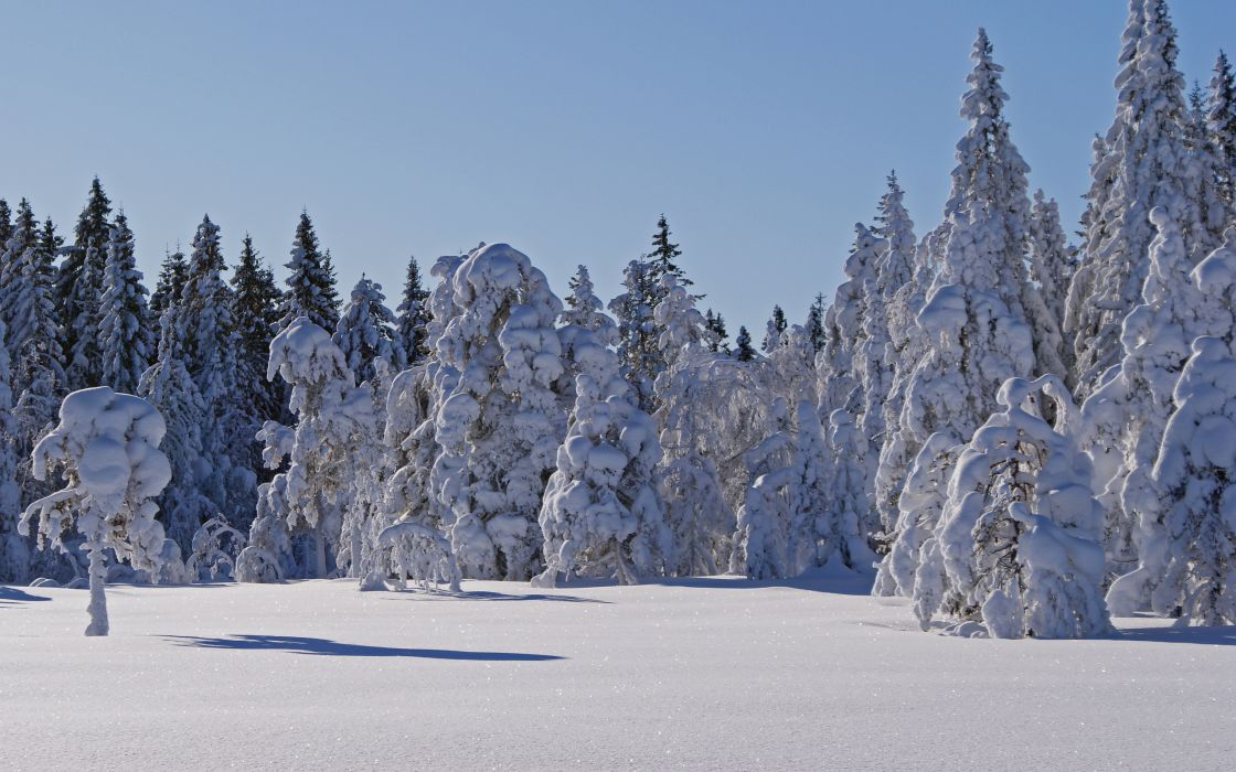 winter forest trees landscape   h wallpaper