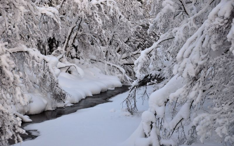winter river trees nature wallpaper