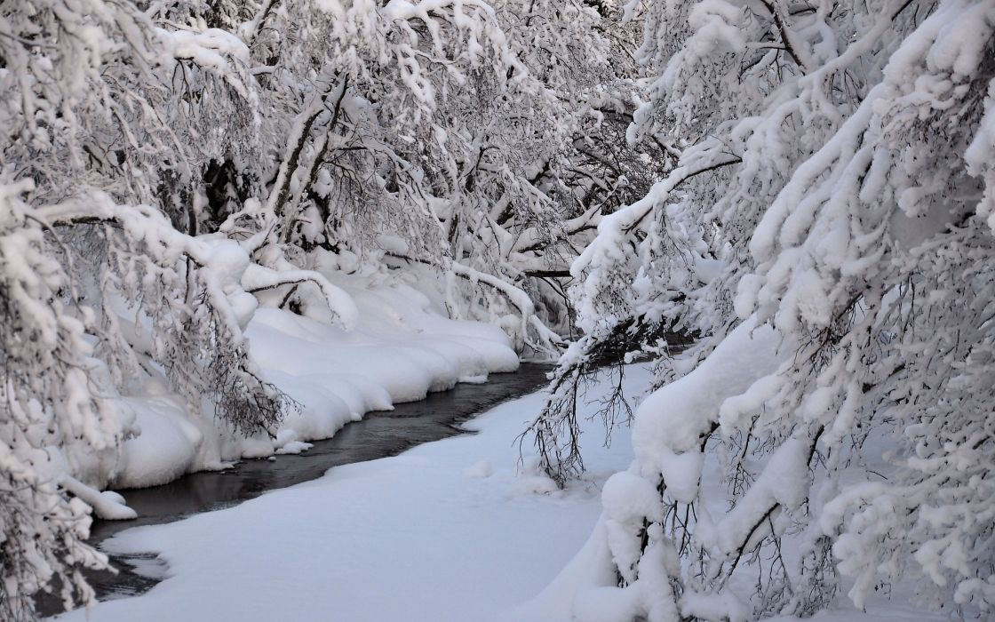 winter river trees nature wallpaper