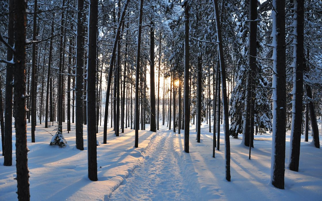 winter trees forest road nature landscape     h wallpaper