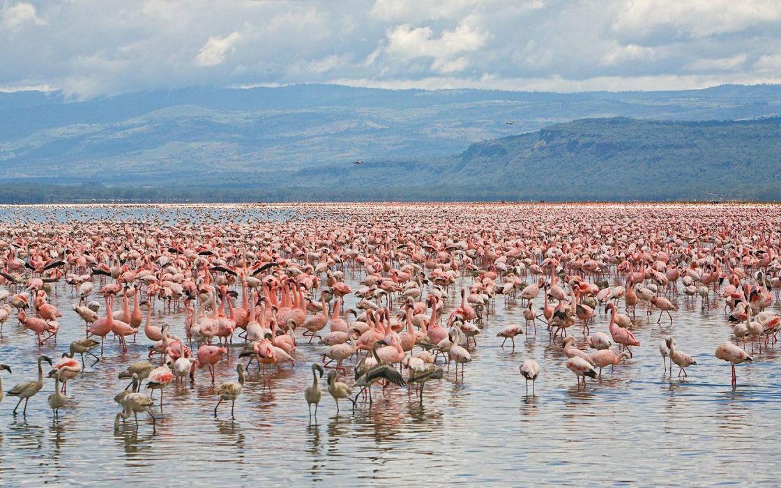 landscapes birds flamingos National Park Kenya wallpaper