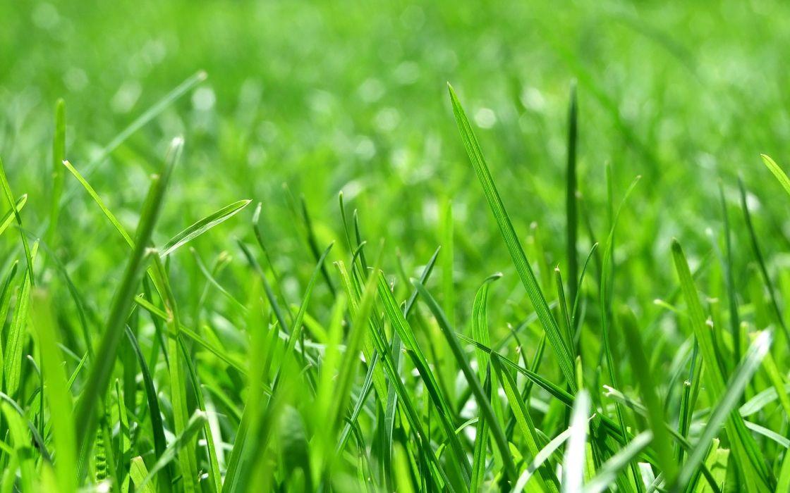 nature grass sunlight macro depth of field wallpaper