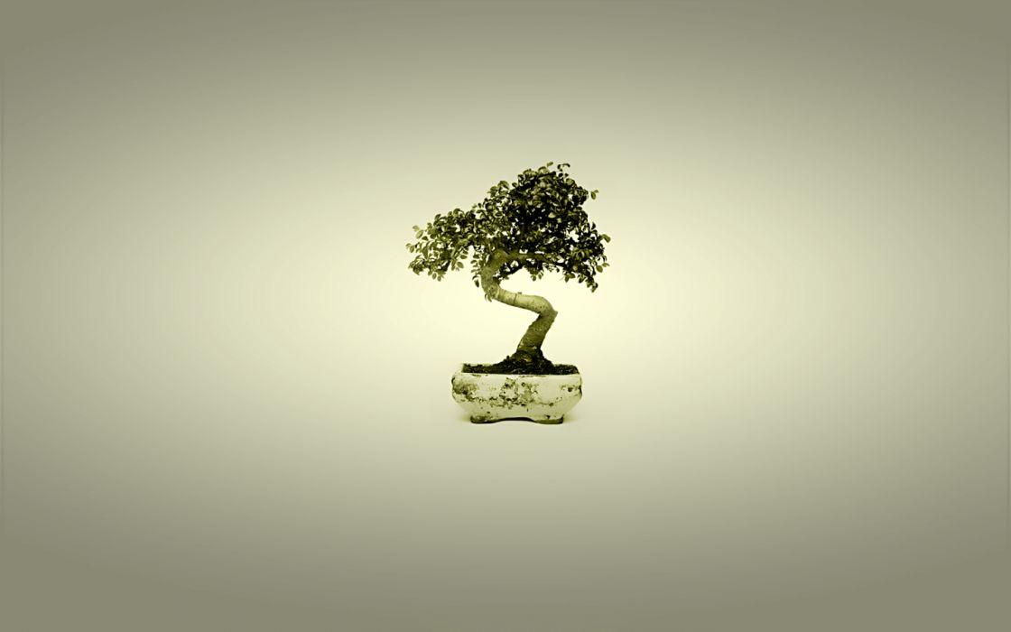 minimalistic trees bonsai simple background wallpaper