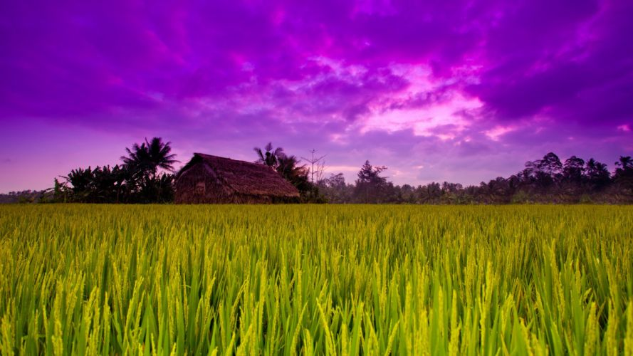 grass houses skyscapes wallpaper