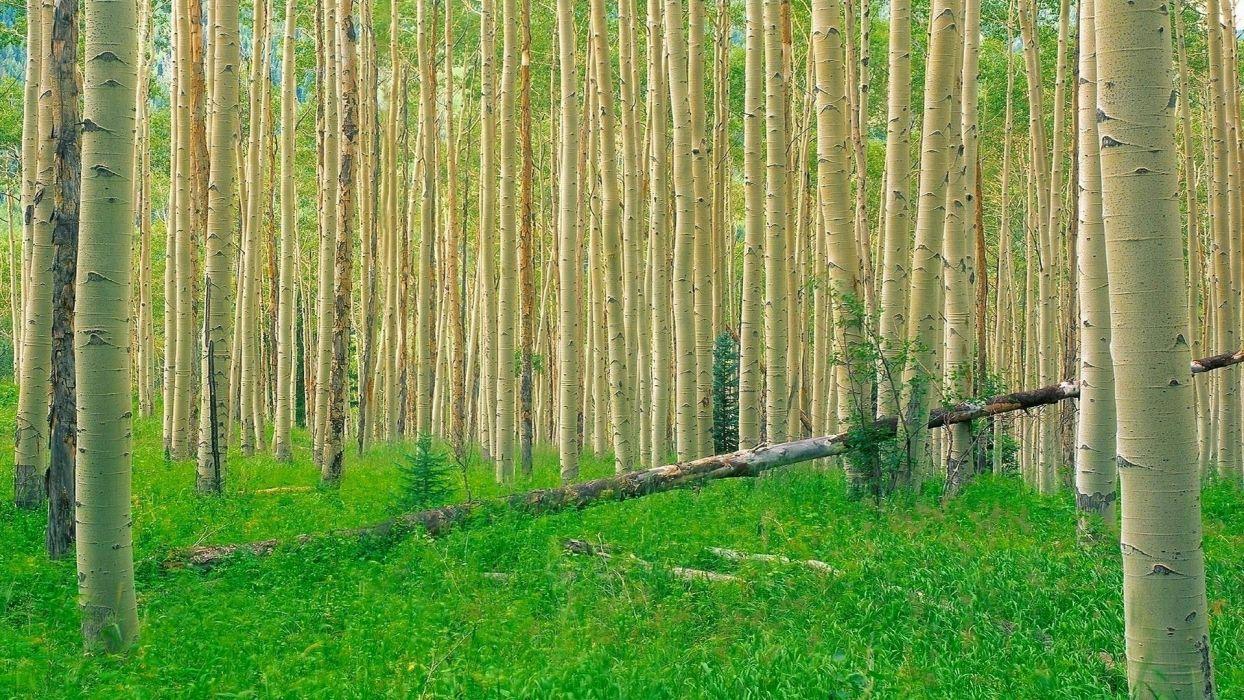 nature trees grass wallpaper