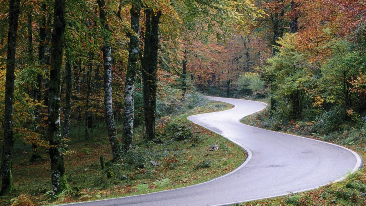 forests roads wallpaper