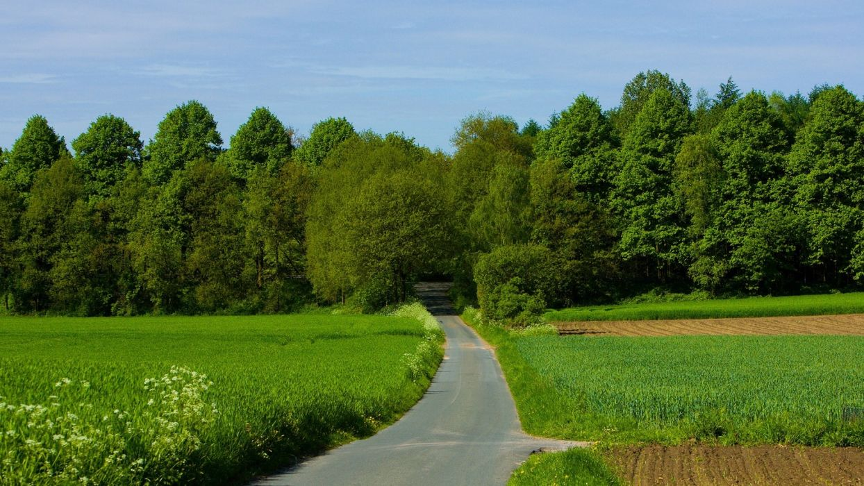 landscapes nature trees cityscapes forests roads wallpaper