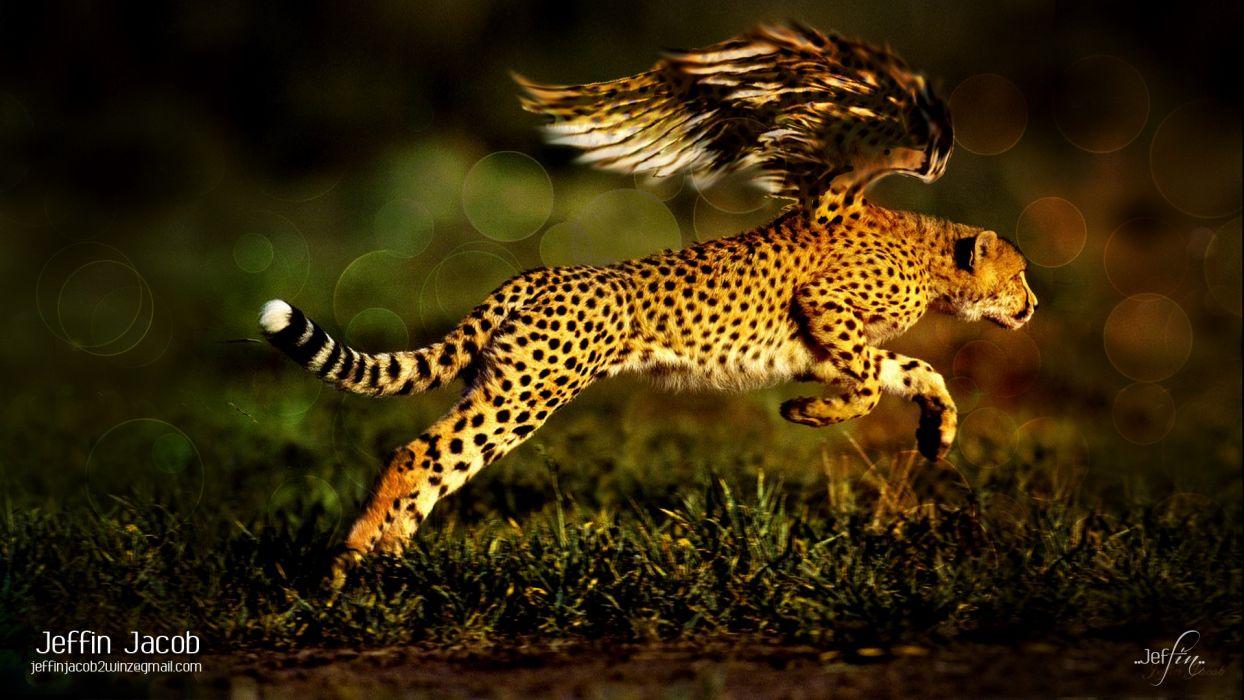 wings animals Jaguar fantasy art digital art artwork wild animals wallpaper