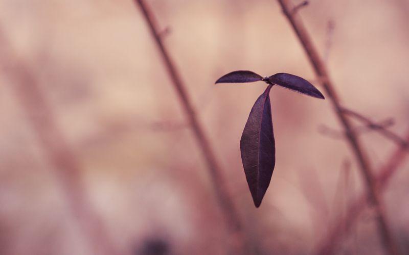plants monochrome Flora depth of field wallpaper