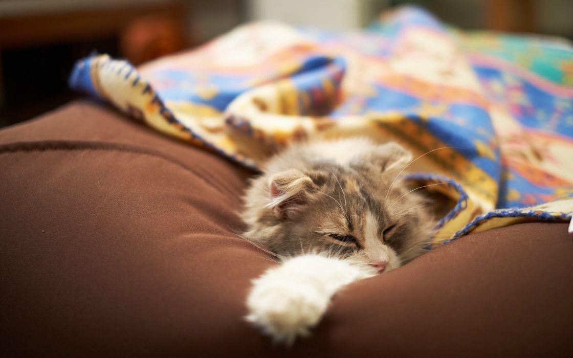 cats animals Cushion wallpaper