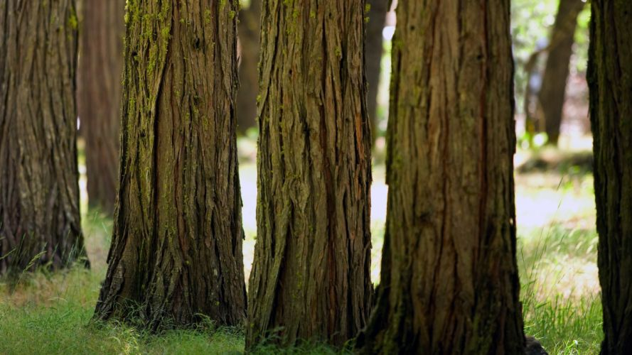 green trees wood forests grass bark wallpaper