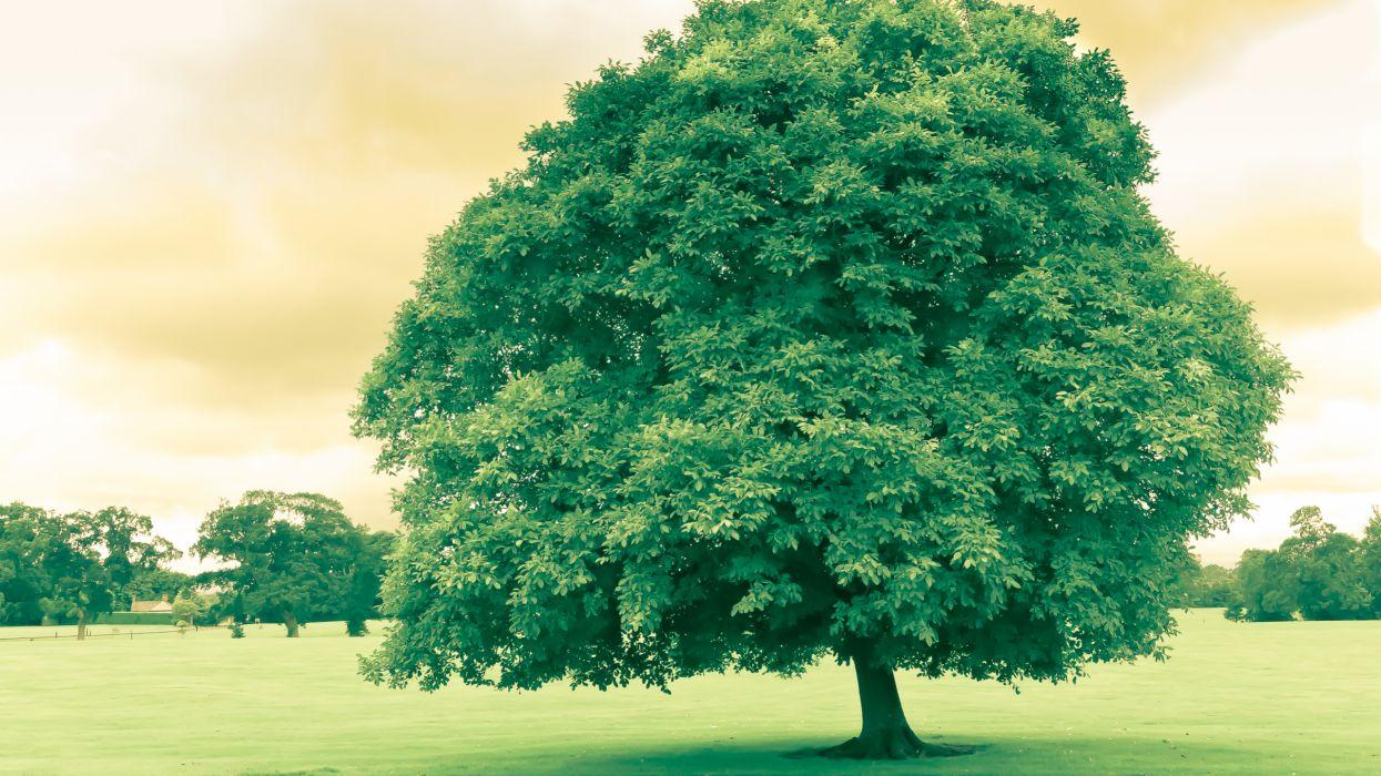 trees monochrome Flora wallpaper