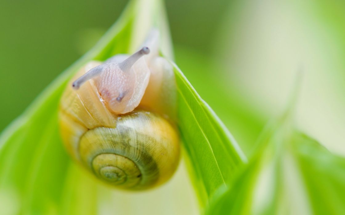 animals snails wallpaper