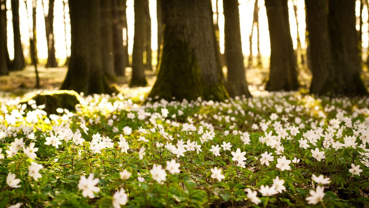 nature trees flowers macro depth of field wallpaper