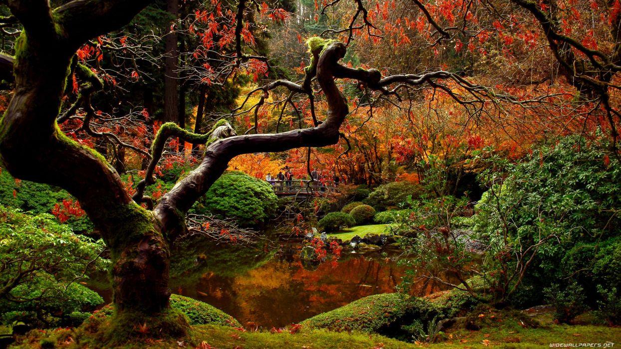 nature autumn bridges wallpaper