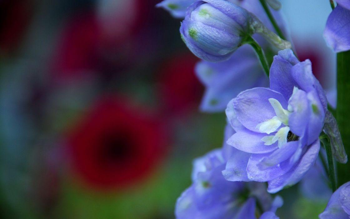 flowers blue flowers wallpaper