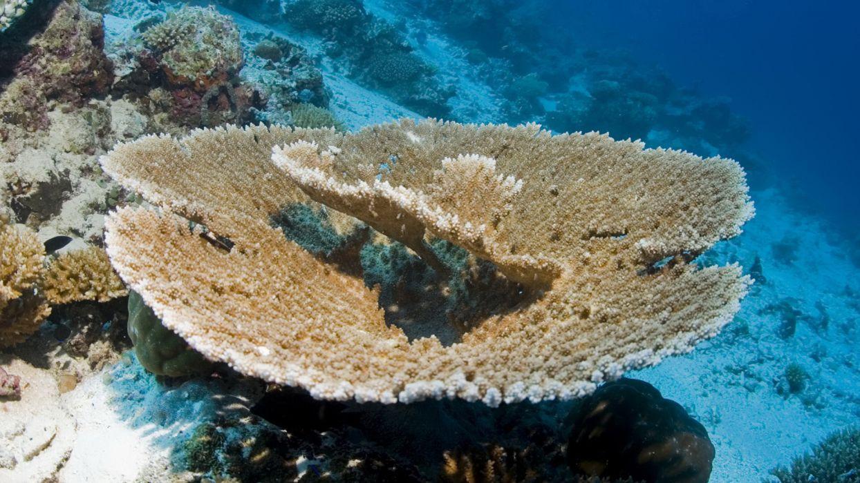ocean coral underwater wallpaper