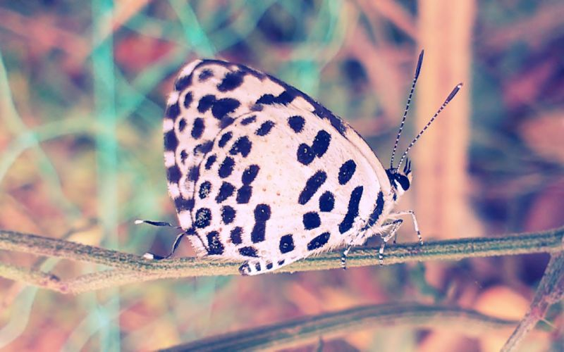 Butterfly nature animal forest color tree hdr ultrahd black white hd 4k wallpaper wallpaper