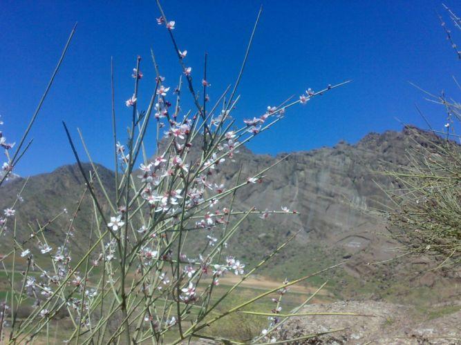 nature bloom Iran wallpaper