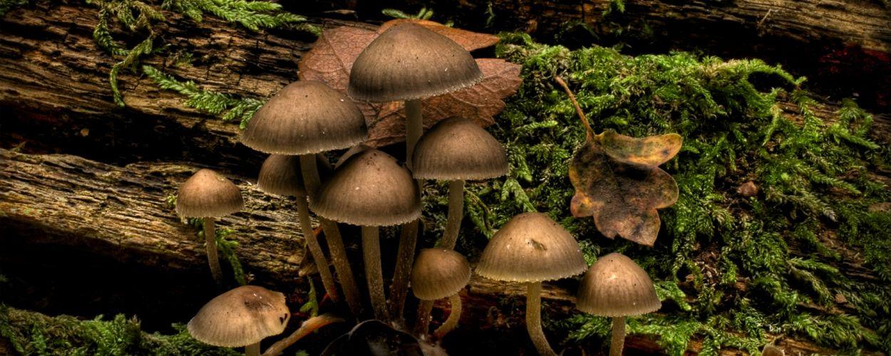 mushrooms moss wallpaper