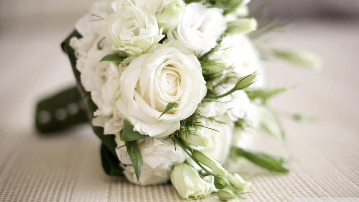 nature bouquet white roses wallpaper