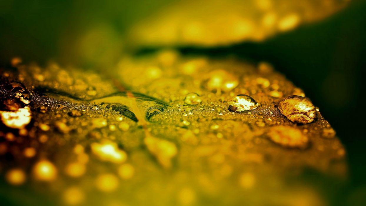 water leaves wallpaper