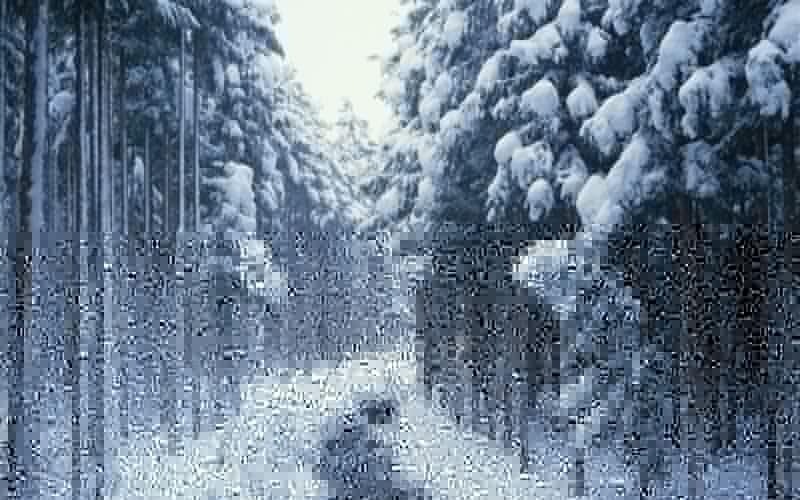 nature winter snow trees creek wallpaper