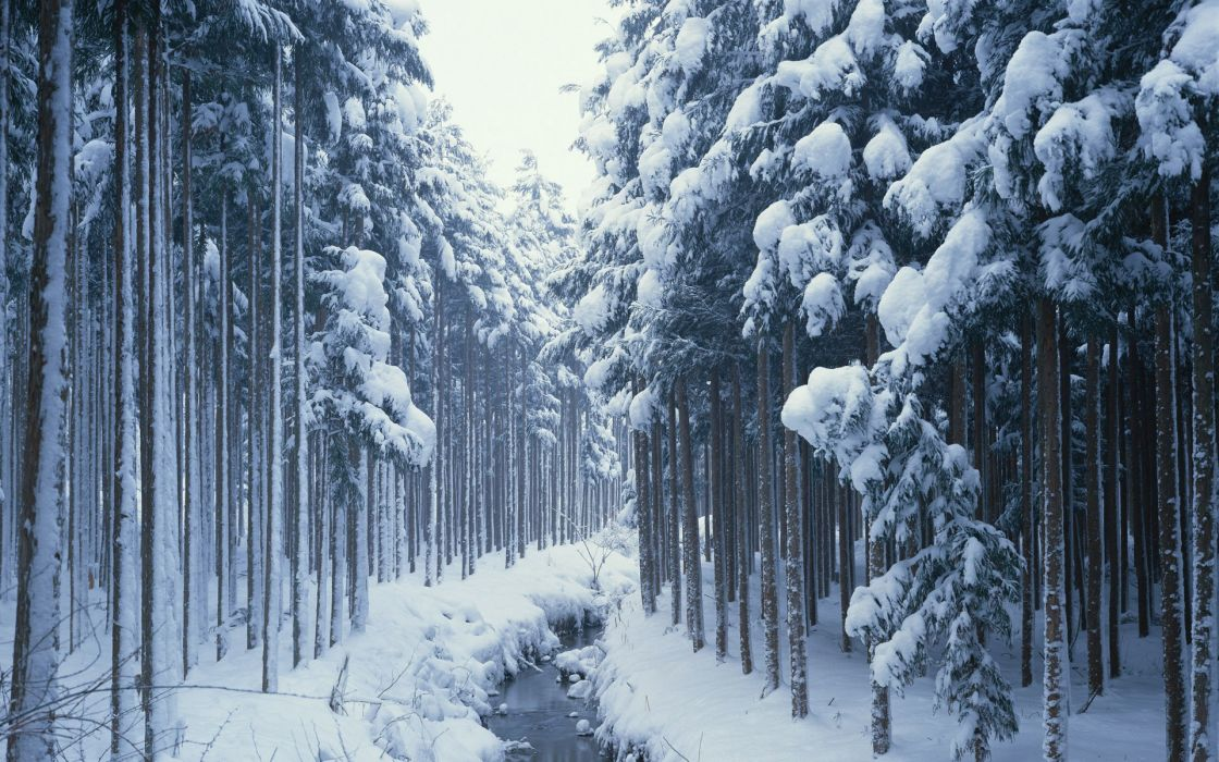 nature winter snow trees creek wallpaper