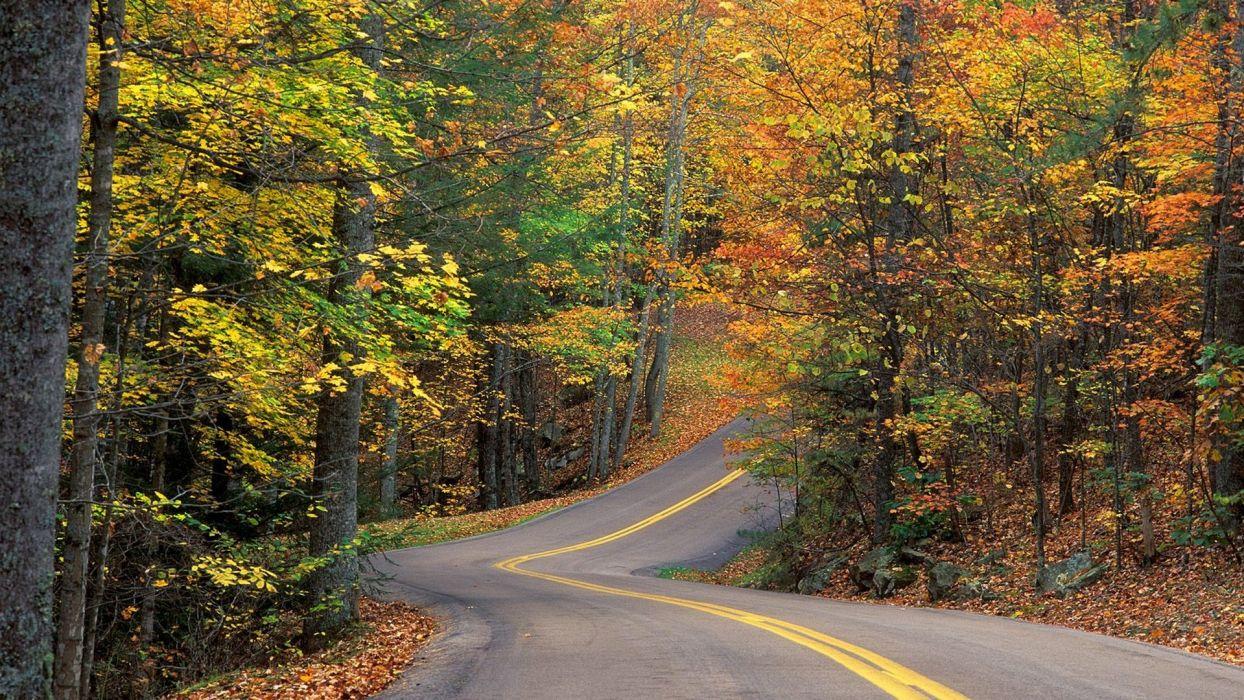 autumn roads colors wallpaper