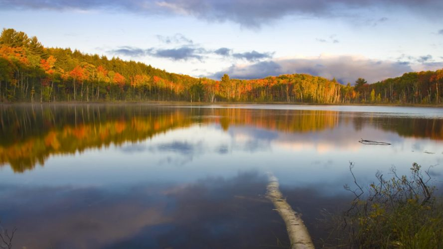 forests national Michigan wallpaper