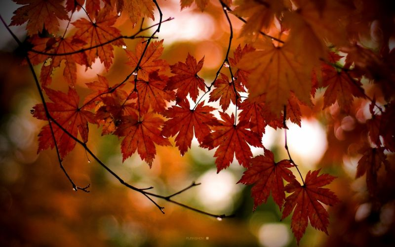 landscapes nature autumn leaves wallpaper