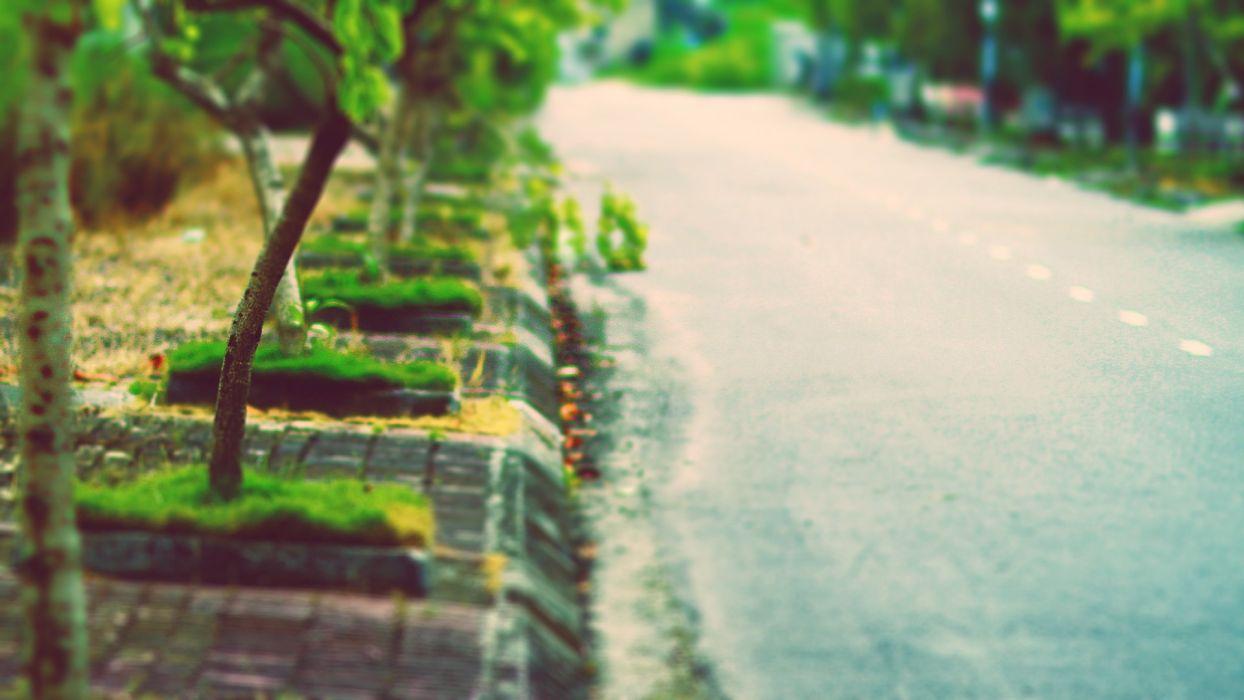 trees flowers plants roads wallpaper