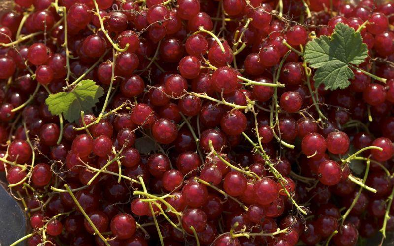 fruits grapes berries wallpaper