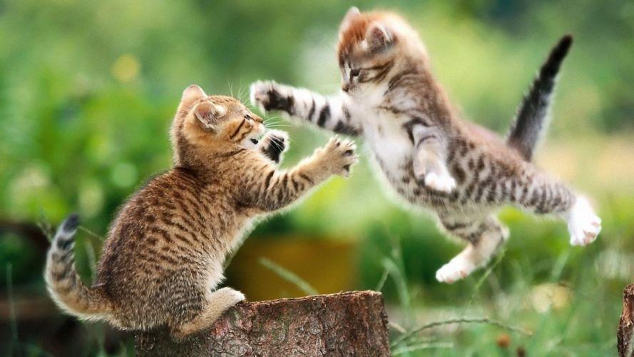 cats animals kittens hugging wallpaper