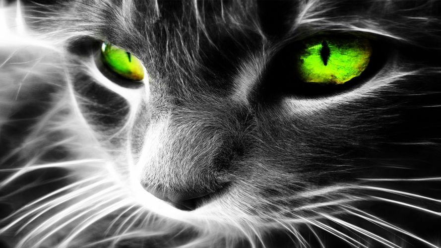 black and white eyes cats animals green eyes wallpaper
