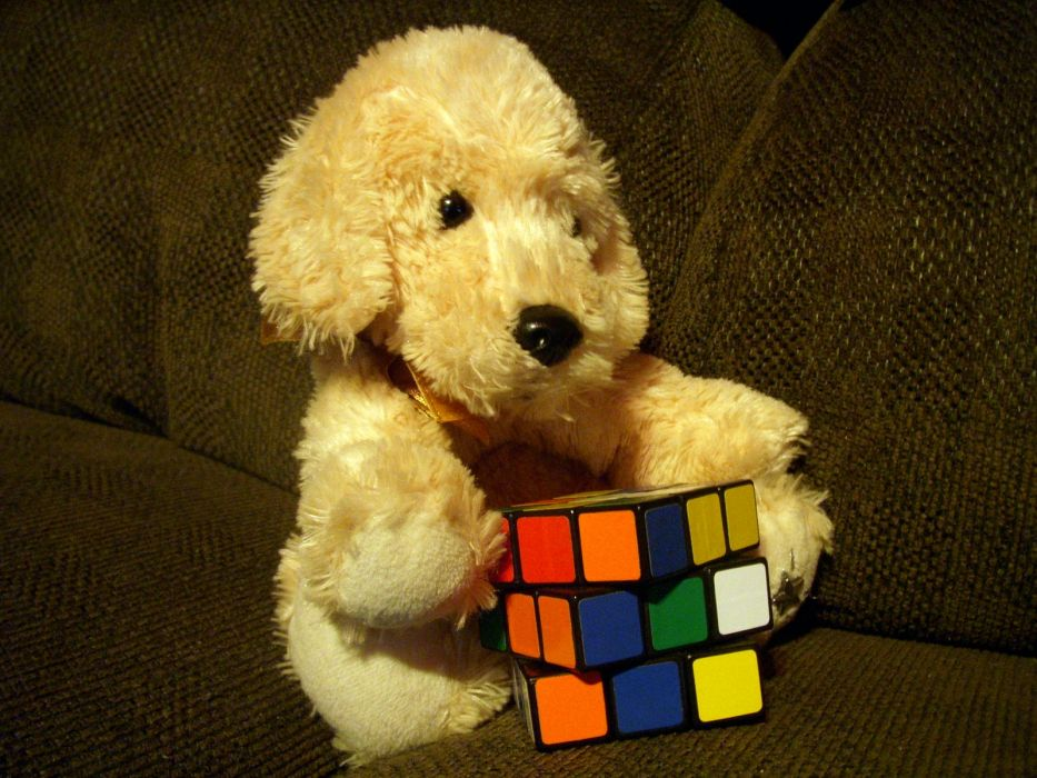 couch dogs puppies stuffed animals Rubiks Cube wallpaper