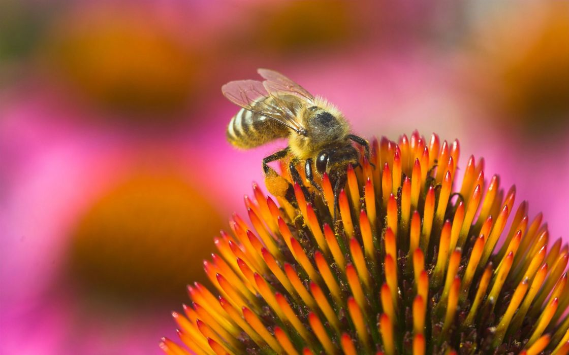 insects bees depth of field wallpaper