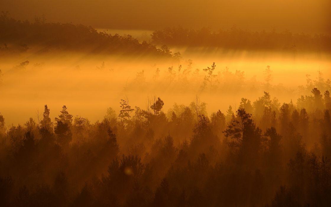 forests mist wallpaper