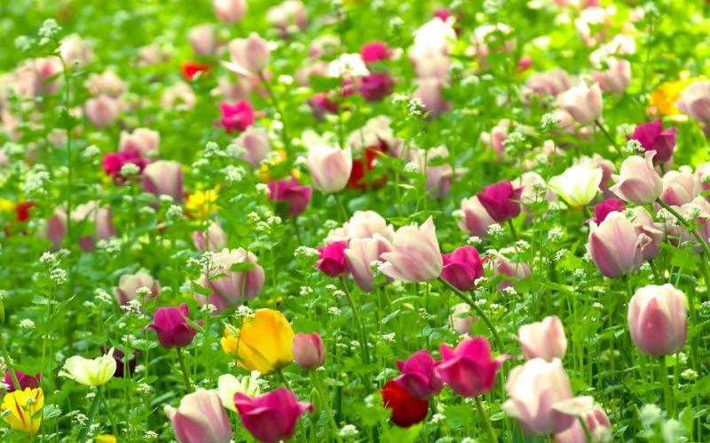 nature multicolor flowers fields summer wallpaper