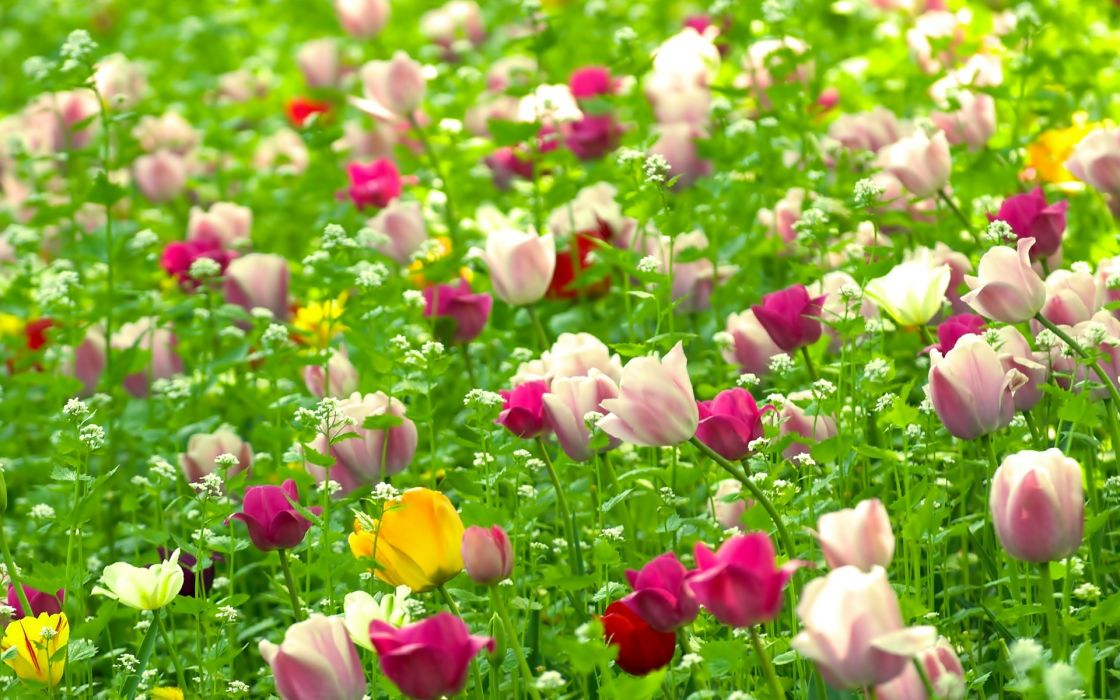 nature multicolor flowers fields summer wallpaper