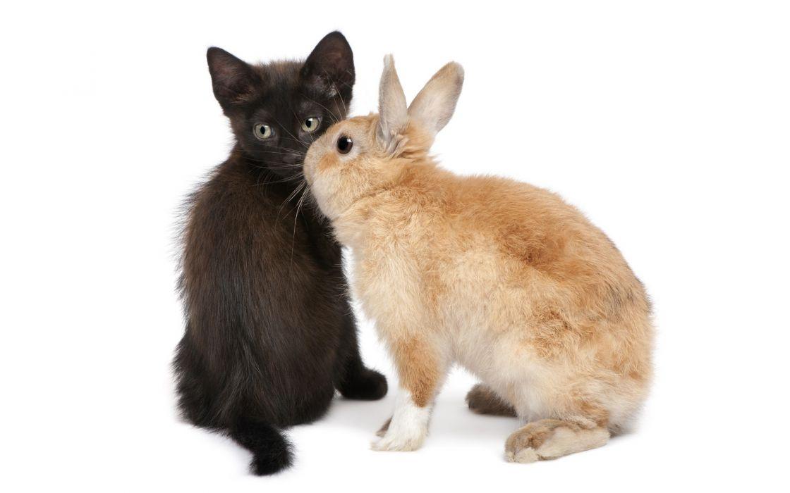 bunnies cats animals wallpaper