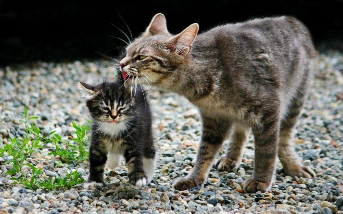 cats animals stones kittens wallpaper