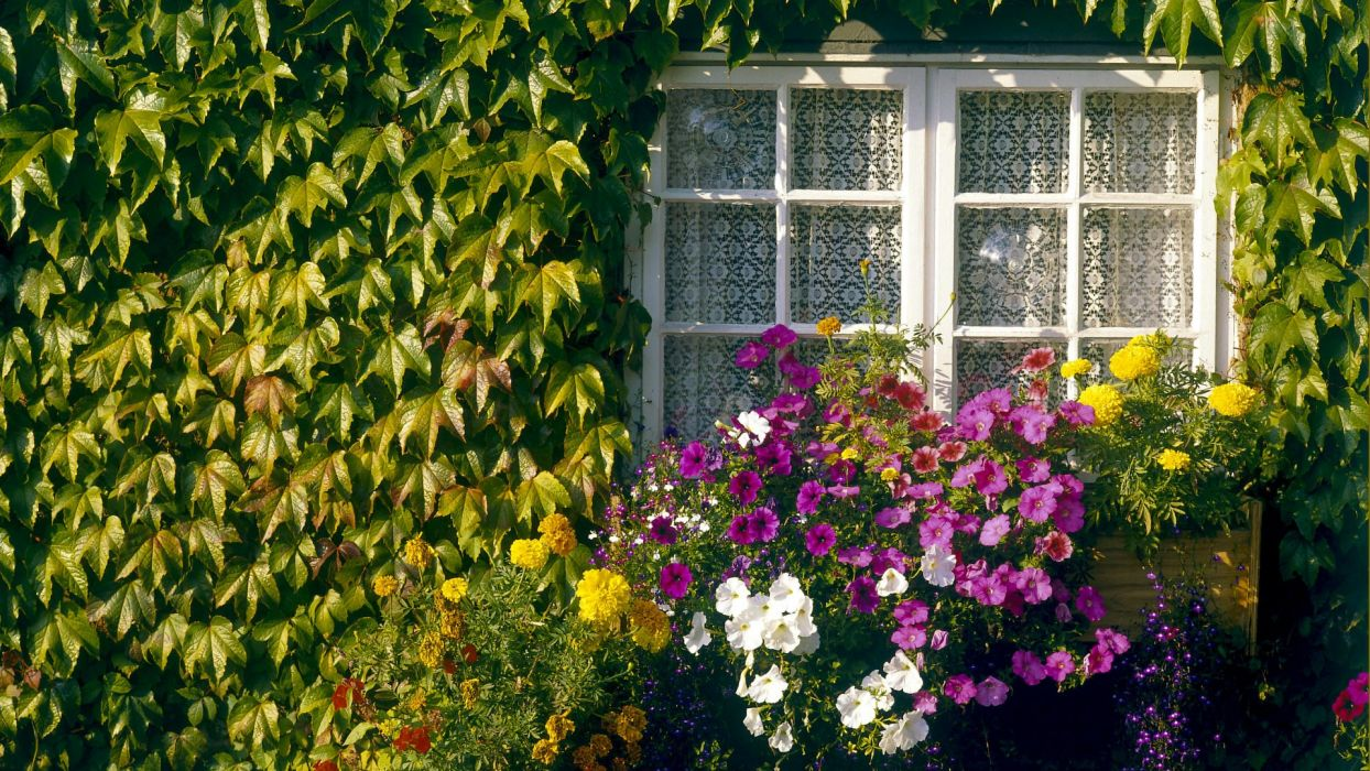 flowers home garden wallpaper