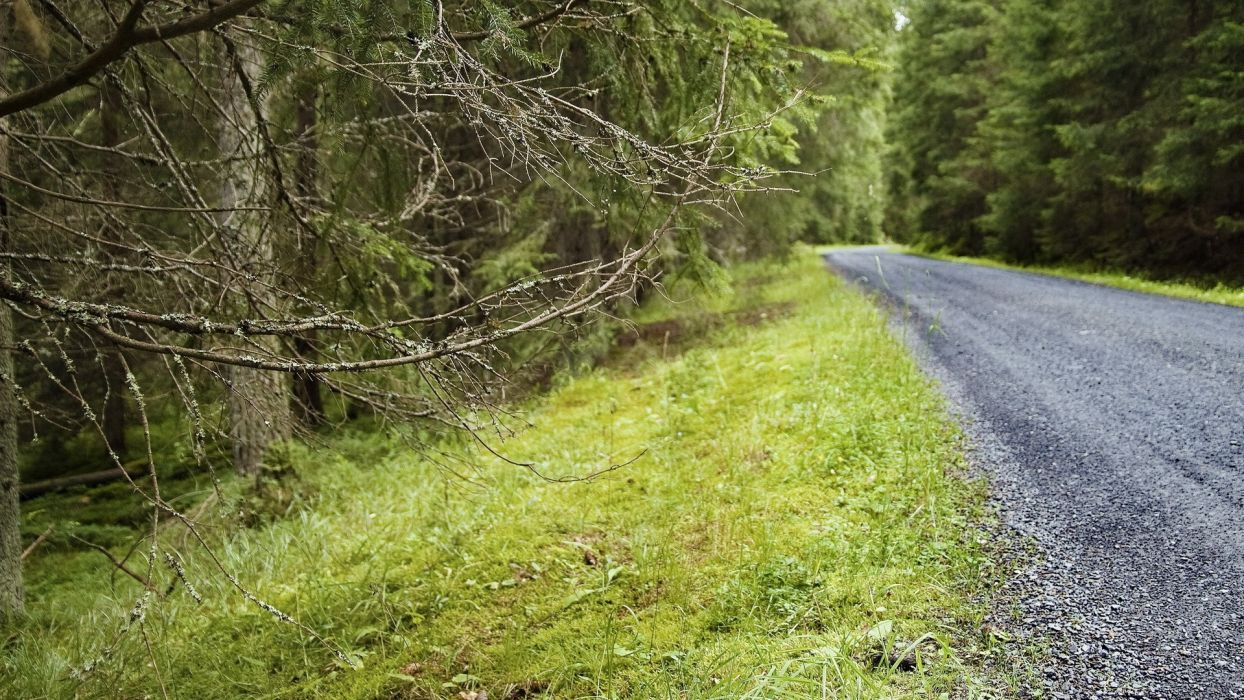 nature trees forests roads wallpaper