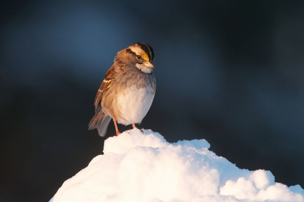 nature animal bird ice resting snow green hd wallpapers wallpaper