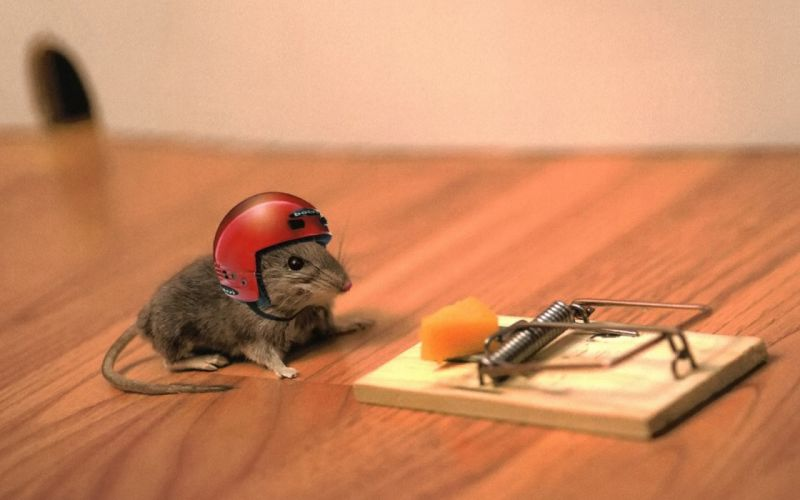 animals helmets mouse trap mice wallpaper
