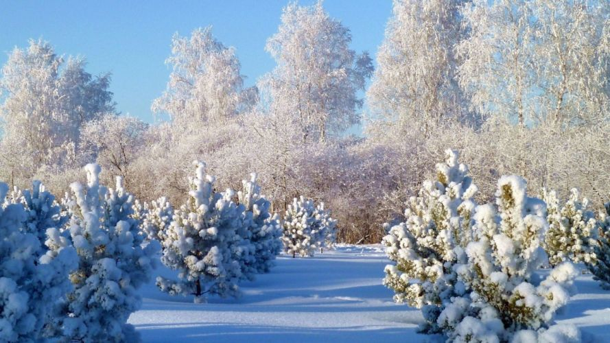 landscapes nature winter snow snowy trees natural scenery wallpaper