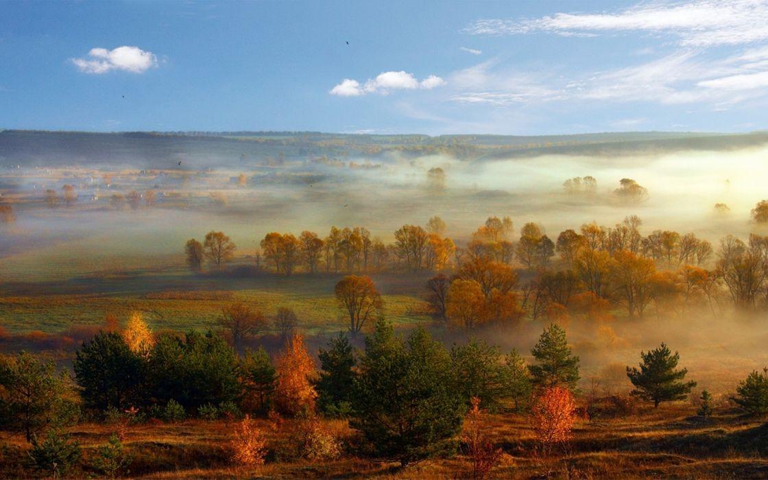 landscapes nature trees fog wallpaper